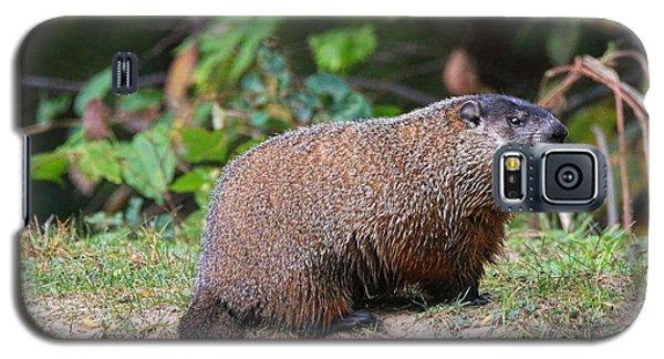 Groundhog  0590 Galaxy S5 Case by Jack Schultz