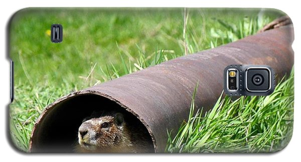 Groundhog In A Pipe Galaxy S5 Case by Will Borden