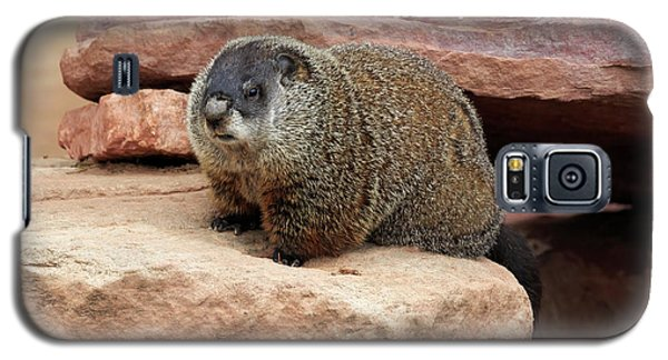 Groundhog Galaxy S5 Case by Louise Heusinkveld