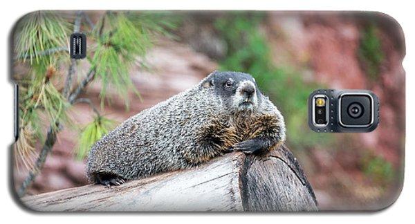 Groundhog On A Log Galaxy S5 Case by Jess Kraft