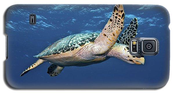 Hawksbill Sea Turtle In Mid-water Galaxy S5 Case by Karen Doody