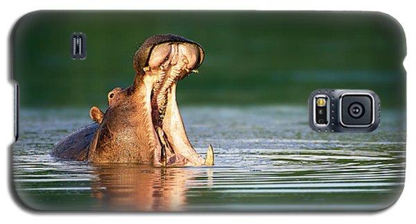 Hippopotamus Galaxy S5 Case by Johan Swanepoel