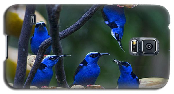 Honeycreeper Galaxy S5 Case by Betsy Knapp