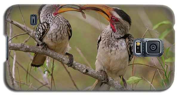 Hornbill Love Galaxy S5 Case by Bruce J Robinson