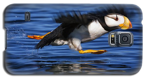 Horned Puffin  Fratercula Corniculata Galaxy S5 Case by Marion Owen