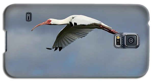 Ibis In Flight Galaxy S5 Case by Carol Groenen