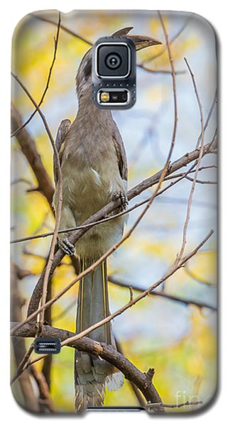 Indian Grey Hornbill Galaxy S5 Case by B. G. Thomson