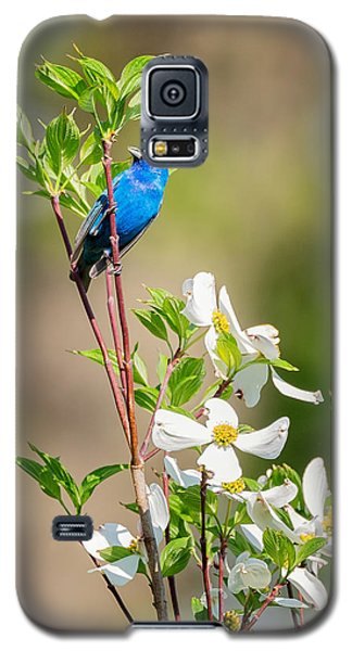 Indigo Bunting In Flowering Dogwood Galaxy S5 Case by Bill Wakeley