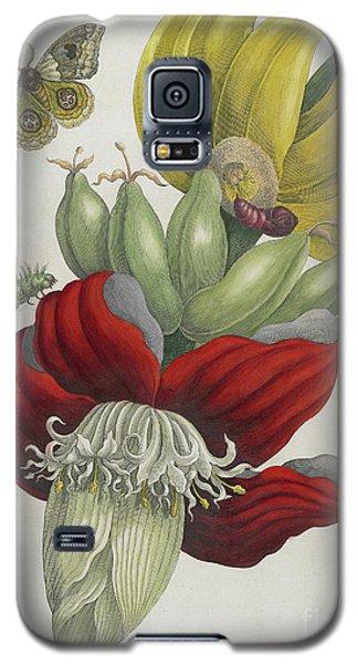 Inflorescence Of Banana, 1705 Galaxy S5 Case by Maria Sibylla Graff Merian
