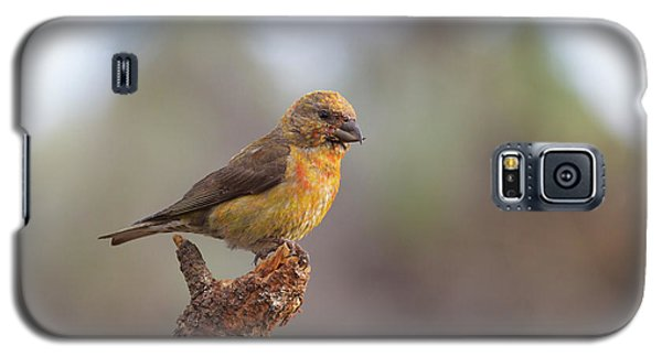 Juvenile Male Red Crossbill Galaxy S5 Case by Doug Lloyd