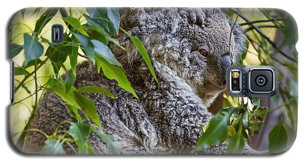 Koala Joey Galaxy S5 Case by Jamie Pham