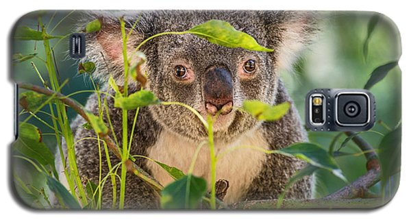 Koala Leaves Galaxy S5 Case by Jamie Pham