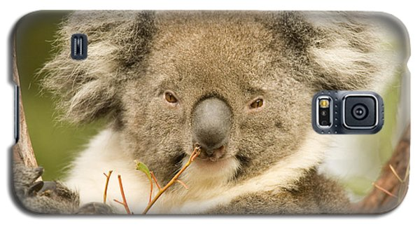 Koala Snack Galaxy S5 Case by Mike  Dawson