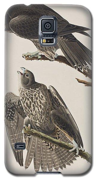 Labrador Falcon Galaxy S5 Case by John James Audubon