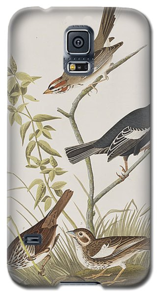 Lark Finch Prairie Finch Brown Song Sparrow Galaxy S5 Case by John James Audubon
