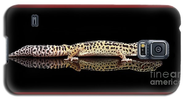 Leopard Gecko Eublepharis Macularius Isolated On Black Background Galaxy S5 Case by Sergey Taran