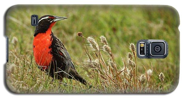 Long-tailed Meadowlark Galaxy S5 Case by Bruce J Robinson