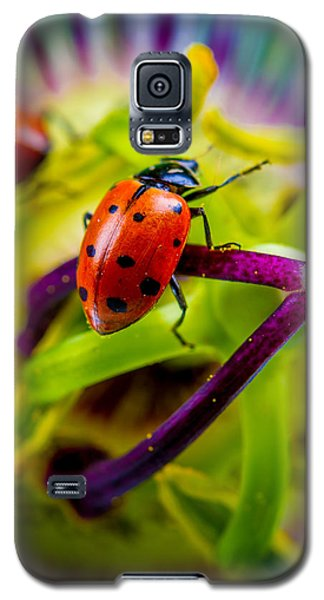 Look At The Colors Over There. Galaxy S5 Case by TC Morgan