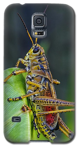 Lubber Grasshopper Galaxy S5 Case by Richard Rizzo