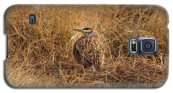 Meadowlark Hiding In Grass Galaxy S5 Case by Robert Frederick
