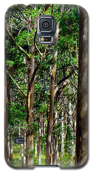 Galaxy S5 Cases - Mist In The Forest Galaxy S5 Case by Az Jackson