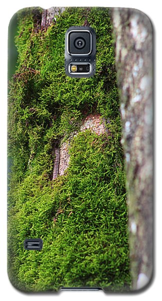 Landscapes Galaxy S5 Cases - Mossy Tree Galaxy S5 Case by Lynn L