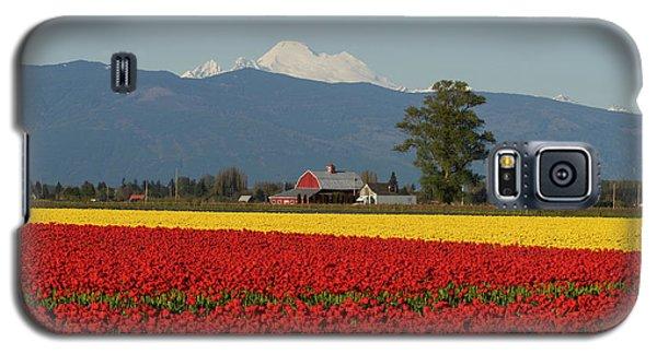 Mount Baker Skagit Valley Tulip Festival Barn Galaxy S5 Case by Mike Reid