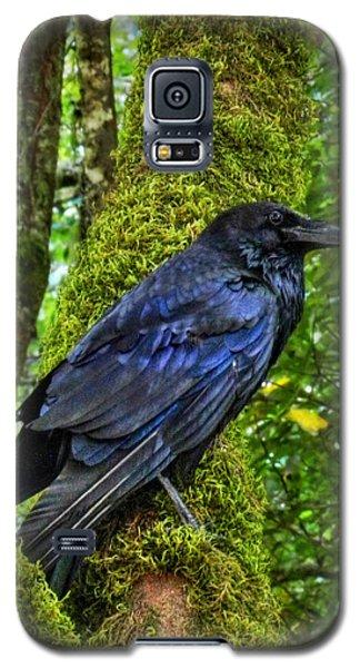 Muir Woods Raven 001 Galaxy S5 Case by Lance Vaughn