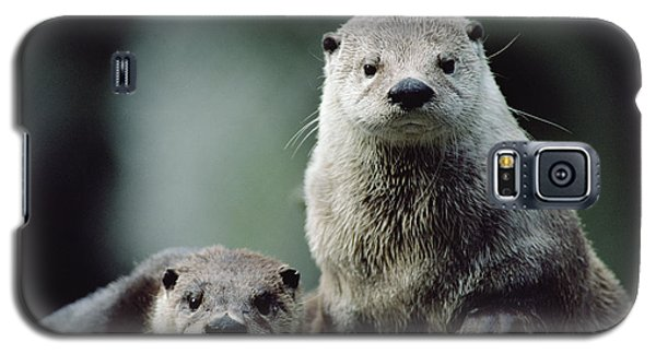 North American River Otter Lontra Galaxy S5 Case by Gerry Ellis