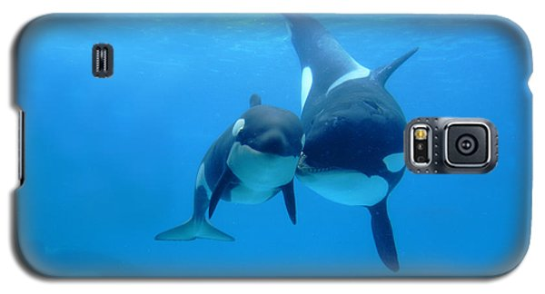 Orca Orcinus Orca Mother And Newborn Galaxy S5 Case by Hiroya Minakuchi