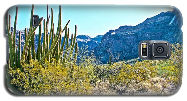 Organ Pipe Cactus In Arch Canyon In Organ Pipe Cactus National Monument-arizona  Galaxy S5 Case by Ruth Hager