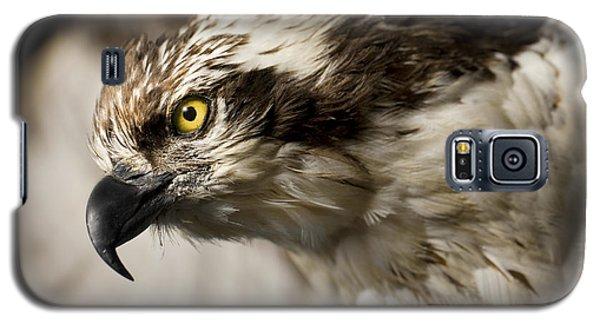 Osprey Galaxy S5 Case by Adam Romanowicz