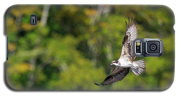 Osprey Galaxy S5 Case by Bill Wakeley