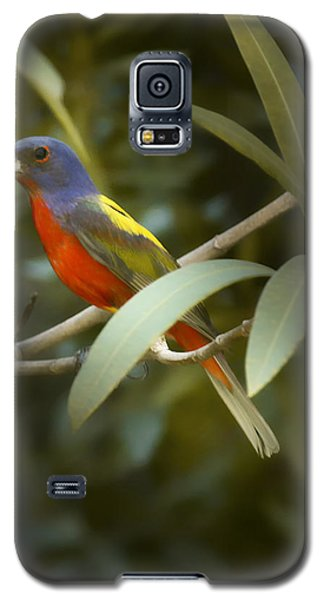 Painted Bunting Male Galaxy S5 Case by Phill Doherty