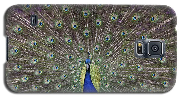 Peacock Display Galaxy S5 Case by Tim Gainey