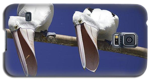 Pelican Burp Galaxy S5 Case by Avalon Fine Art Photography