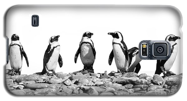 Penguins Galaxy S5 Case by Delphimages Photo Creations