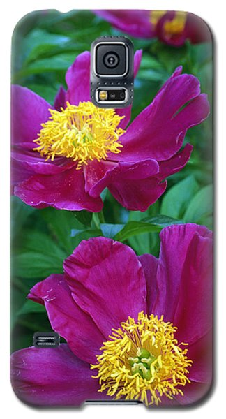 Flower Galaxy S5 Cases - Pianese Flowers Galaxy S5 Case by Natural Selection Tony Sweet