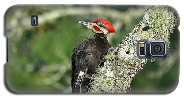 Pileated Perch Galaxy S5 Case by Al Powell Photography USA