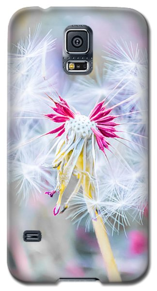 Popular Galaxy S5 Cases - Pink Dandelion Galaxy S5 Case by Parker Cunningham
