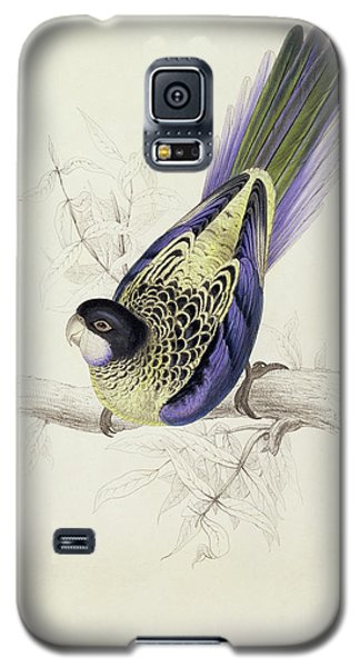 Platycercus Brownii, Or Browns Parakeet Galaxy S5 Case by Edward Lear