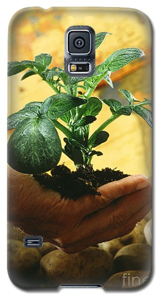 Potato Plant Galaxy S5 Case by Science Source