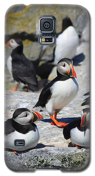 Puffins At Rest Galaxy S5 Case by John Burk
