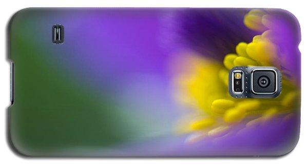 Flower Galaxy S5 Cases - Pulsatilla Galaxy S5 Case by Silke Magino