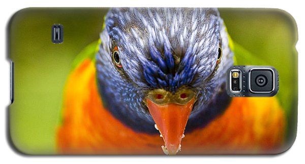 Rainbow Lorikeet Galaxy S5 Case by Avalon Fine Art Photography