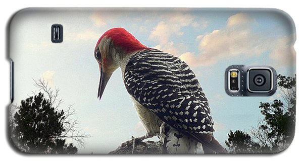 Red-bellied Woodpecker - Tree Top Galaxy S5 Case by Al Powell Photography USA