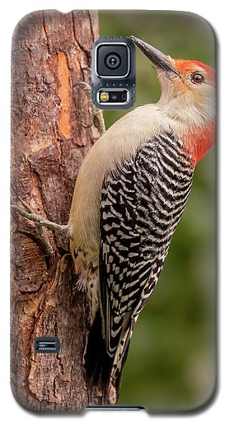 Red Bellied Woodpecker 3 Galaxy S5 Case by Jim Hughes