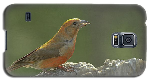 Red Crossbill Galaxy S5 Case by Constance Puttkemery