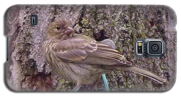 Red Crossbill Female  Indiana  Summer Galaxy S5 Case by Rory Cubel