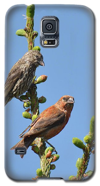 Red Crossbill Pair Galaxy S5 Case by Alan Lenk